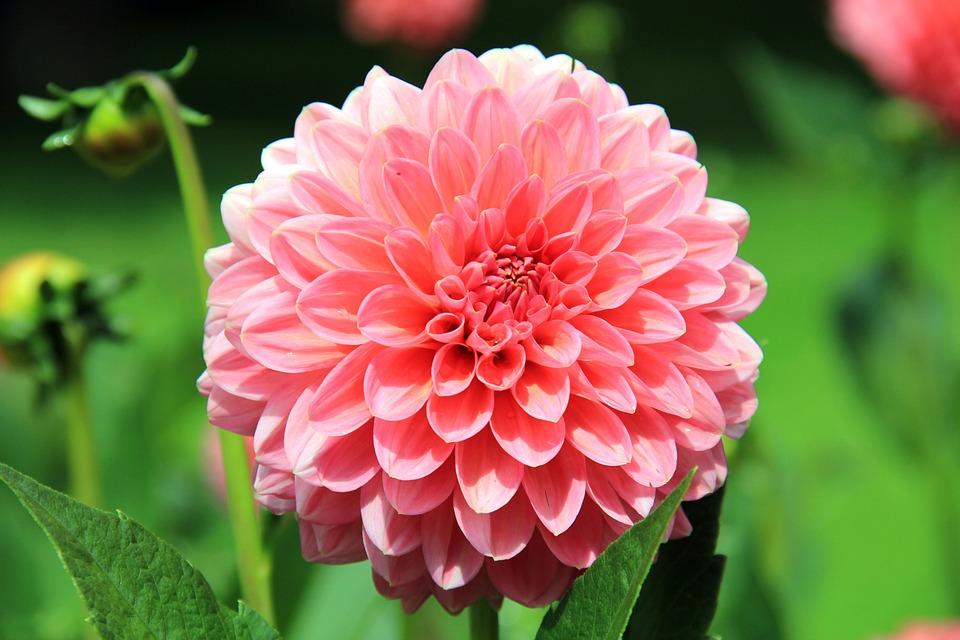 flower-197343_960_720