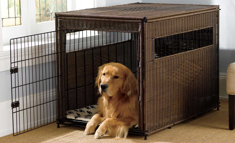 how-to-choose-a-dog-crate