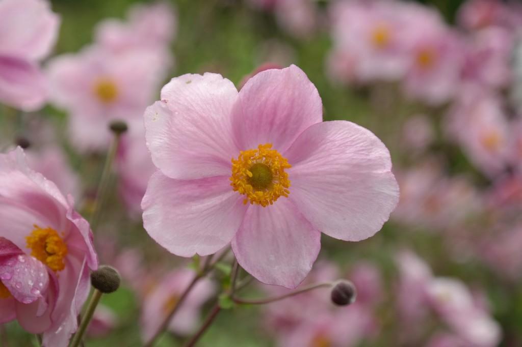 flower-215564_1280